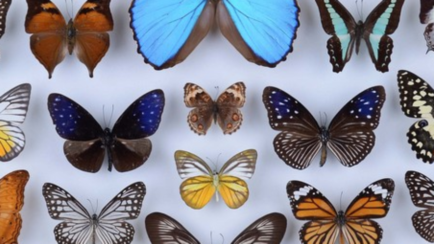 Тайните на Природонаучния музей