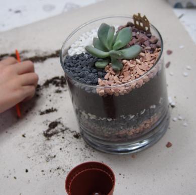 Да засадим растение!